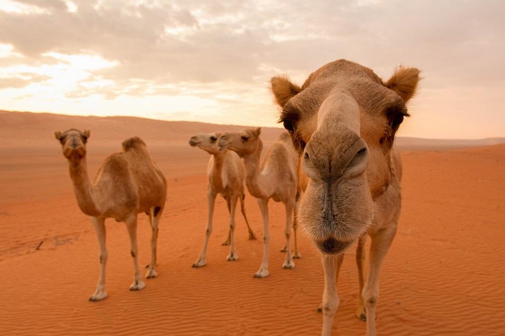 Übermorgenland Wüstenschiffe